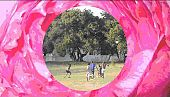 Playing football Inside You - Helen Carmel Benigson <br>(Princess Belsize Dollar) 2010